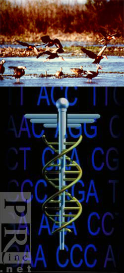 Photo of DNA caduceus and flock of birds