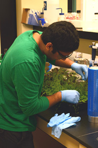 Photo of Sid Patel collecting seedlings for RNA isolation